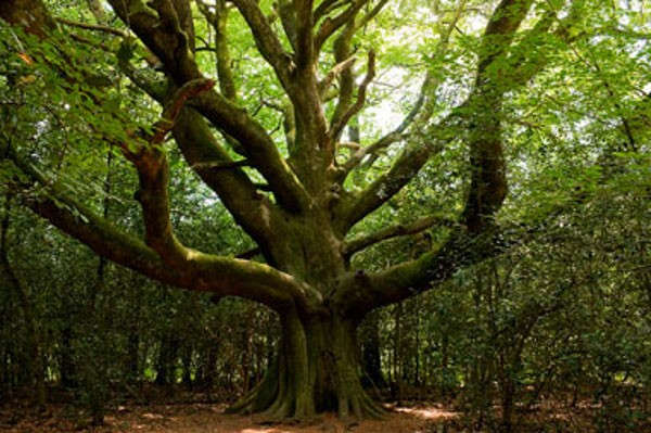 """Résultat de recherche d'images pour """"forêt bretagne"""""""